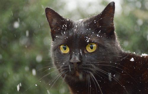 Kass William: Rahvusvahelise noorteinfo võrgustiku Eurodesk digispetsialist